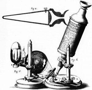 Das Lichtmikroskop - Geschichte, Aufbau und Funktion